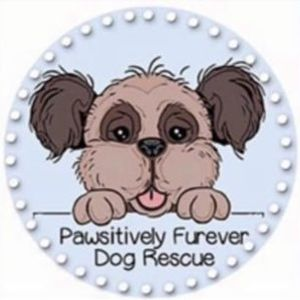 Pawsitively furever dog rescue Logo