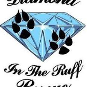 Diamond in the Ruff Rescue Logo