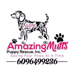 Amazing Mutts Puppy Rescue, Inc. Logo