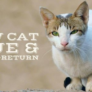 Arklow Cat Rescue Logo