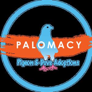 Palomacy Pigeon & Dove Adoptions Logo