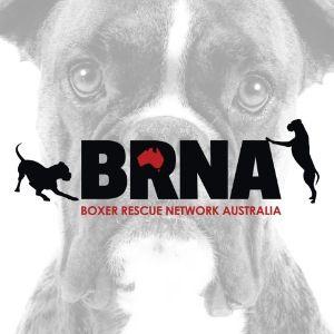 Boxer Rescue Network Australia Logo