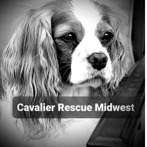 Cavalier Rescue Midwest INC Logo